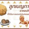 ลูกเบญกานี ยาแผนไทย ที่ได้รับการยอมรับในสรรพคุณ