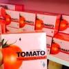 มาส์กมะเขือเทศ หยุดสิว ผิวใส Tomato Anti Acne Sleeping Mask 10 ml