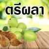 """""""พิกัดยาตรีผลา"""" ตามตำรับยาไทยที่แท้จริง"""