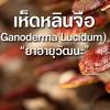 เห็ดหลินจือ (Ganoderma Lucidum) ยาอายุวัฒนะ