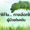 ลูกใต้ใบ ช่วยคนไทยห่างไกลโรคตับ #11 ลูกใต้ใบ... สูตรตำรับขาวละออ