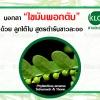 """ลูกใต้ใบ ช่วยคนไทยห่างไกลโรคตับ #12 บอกลา """"ไขมันพอกตับ"""" ด้วย ลูกใต้ใบสูตรตำรับขาวละออ"""
