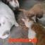 ปลาเส้นสำหรับน้องหมา น้องแมว/Fish Snack for dog and cat thumbnail 6