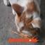 ปลาเส้นสำหรับน้องหมา น้องแมว/Fish Snack for dog and cat thumbnail 5