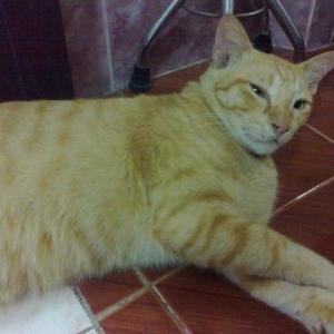 5 วิธีปราบพฤติกรรมก้าวร้าวของน้องแมว โดย โรงพยาบาลเชียงใหม่รักสัตว์