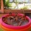 สระว่ายน้ำเป่าลม Intex (6 ฟุต) thumbnail 9
