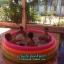 สระว่ายน้ำเป่าลม Intex (6 ฟุต) thumbnail 7