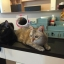 DIY box รุ่นแมว 4 ลิ้นชัก thumbnail 6
