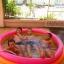 สระว่ายน้ำเป่าลม Intex (6 ฟุต) thumbnail 10