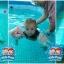 สระว่ายน้ำสำเร็จรูป Size 15 ฟุต thumbnail 19
