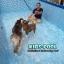 สระว่ายน้ำสำเร็จรูป Size 15 ฟุต thumbnail 4