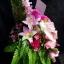 Flower-Hanabana ใหญ่ thumbnail 2