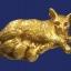 หนูกินนมแมวปัดทอง ครูบาพร วัดปู่ฮ้อ thumbnail 1
