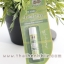 ลิปบาล์มน้ำมันรำข้าว กลิ่นแตงไทย อภัยภูเบศร Melon thumbnail 1