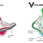 มาทำความรู้จักกับรองเท้าประเภท Barefoot กันเถอะ