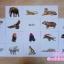 Flash Card (starter 1) แฟลชการ์ดเสริมพัฒนาการ ช่วยกระตุ้นสมองซีกขวา thumbnail 4