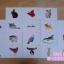 Flash Card (starter 1) แฟลชการ์ดเสริมพัฒนาการ ช่วยกระตุ้นสมองซีกขวา thumbnail 6