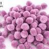 ปอมปอมไหมพรม สีม่วงอ่อนเปลือกมังคุด (พาลเทล) 3ซม. (100 ลูก)