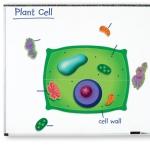 ของเล่นเด็ก ของเล่นเสริมพัฒนาการ Giant Magnetic Plant Cell