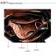 กระเป๋าหนังปั้มลาย เกรดA แบรนด์ OPPO สีดำ ยกชุดได้ 3 ใบ คุณภาพดี(รับประกันของแท้เหมือนแบบ 100%) VIP : 1500 thumbnail 7