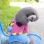 สี่ขาhoodหมีชมพูไซด์ S M XL thumbnail 1