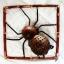 โคมไฟกะลามะพร้าวรูปแมงมุม Coconut Shell Lamp spider Wall hanging thumbnail 1