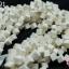 หินปะการัง สีขาว ทรงลูกเต๋า 8มิล (จีน) (1เส้น) thumbnail 1