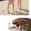เสื้อคู่รัก ชุดคู่รักเที่ยวทะเลชาย +หญิง เสื้อยืดสีขาวลายต้นมะพร้าวลอยน้ำ กางเกงขาสั้นลายไทยโทนสีส้ม +พร้อมส่ง+ thumbnail 6