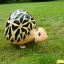 Turtle Walking Balloons - คุณเต่าน้อยบอลลูน / TL-K012 thumbnail 1