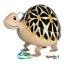 Turtle Walking Balloons - คุณเต่าน้อยบอลลูน / TL-K012 thumbnail 2