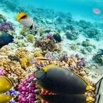 ลายใต้ท้องทะเล #28