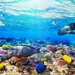 ลายใต้ท้องทะเล #12