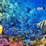 ลายใต้ท้องทะเล #25