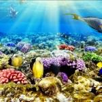 ลายใต้ท้องทะเล #13