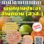 โหลดแนวข้อสอบ พนักงานประจำสำนักงาน (สวส.) กรมวิชาการเกษตร thumbnail 1