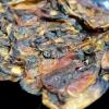 อาหารทะเลแห้ง หอยแมลงภู่ผ่า (ครึ่งกิโลกรัม)