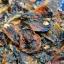 อาหารทะเลแห้ง หอยแมลงภู่ผ่า (2ขีด) thumbnail 1