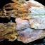 ปลาหมึกหอมแห้ง เบอร์3 (ครึ่งกิโลกรัม) thumbnail 3