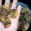 อาหารทะเลแห้ง หอยแมลงภู่ผ่า (ครึ่งกิโลกรัม) thumbnail 3
