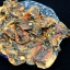 อาหารทะเลแห้ง หอยแมลงภู่ผ่า (ครึ่งกิโลกรัม) thumbnail 2