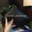 พร้อมส่ง 3 สี KATE SPADE New York Mini Crossbody Bag thumbnail 4