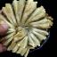 อาหารทะเลแห้ง ปลาวง 1.5ขีด (ประมาณ8-9ตัว) thumbnail 2