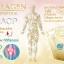 Donut Collagen TriPeptide HACP โดนัท คอลลาเจน ไตรเปปไทด์ เอชเอซีพี thumbnail 4