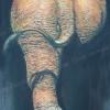 ช้าง Elephant