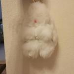 กระต่ายสีขาว 13cm
