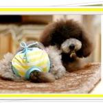 กางเกงในสุนัขไซส์ L (จัดส่งฟรี)