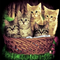 ลายฮาฟโทนแนวแมว