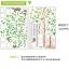 ต้นไม้กรอบรูป2แผ่น สูง170cm a302 thumbnail 4