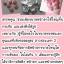 ฮอร์โมนจีน อกอึ๋ม แท้ เพิ่มหน้าอก thumbnail 4