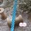 ริบบิ้นผ้าแถบ ลายตารางสีฟ้า กว้าง 1 ซ.ม. แบ่งขายเป็นหลา thumbnail 2